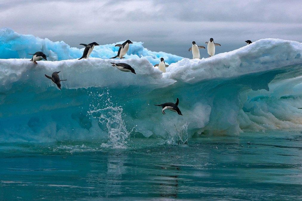Животные арктики фотографии животных антарктиды